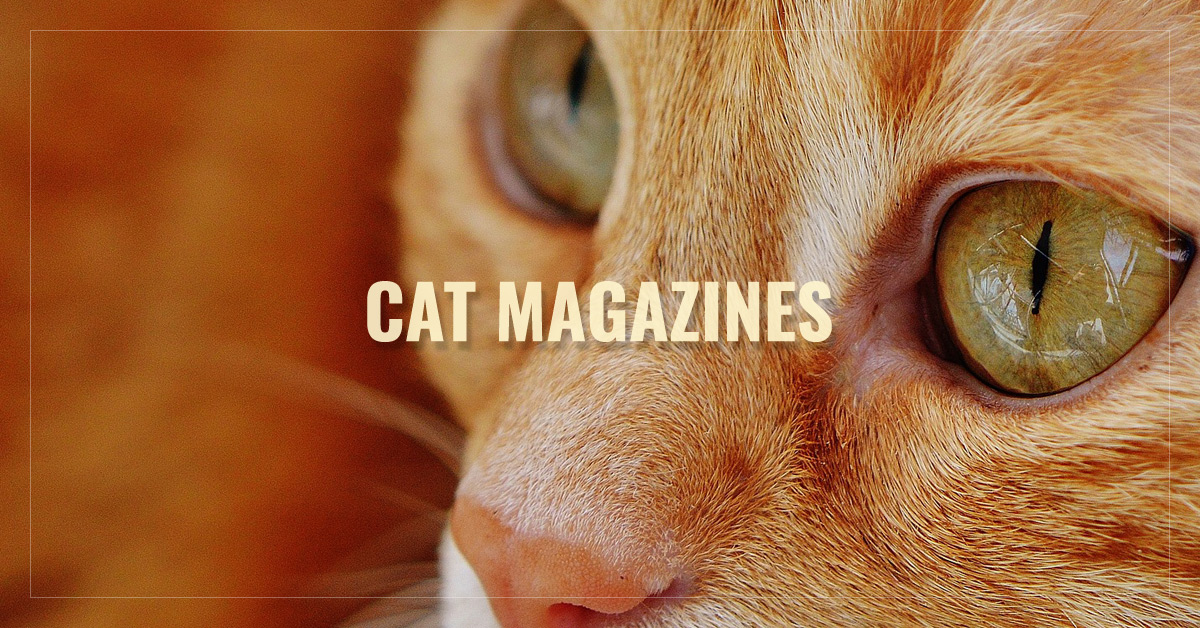 Best Cat Magazines  -  Catster,  Modern Cat,  Your Cat,  I Love Cats and more  - AllYouCanRead.com