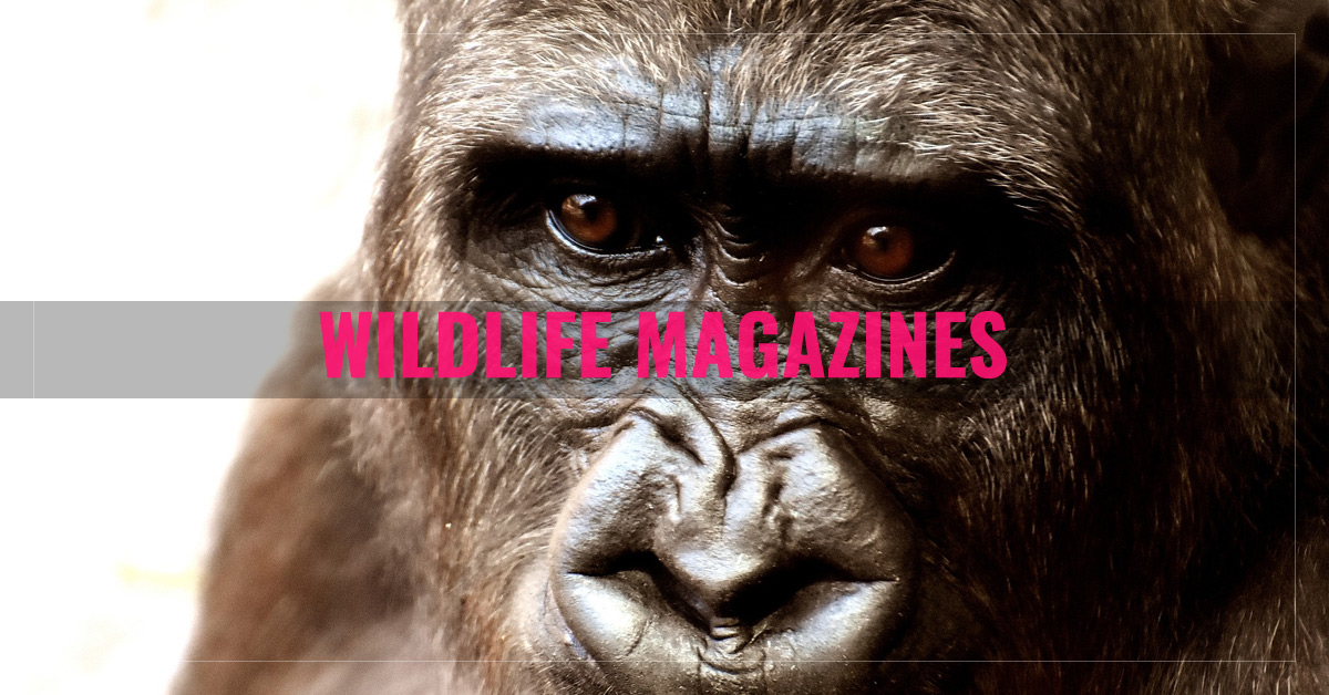 Top 10 Wildlife Magazines