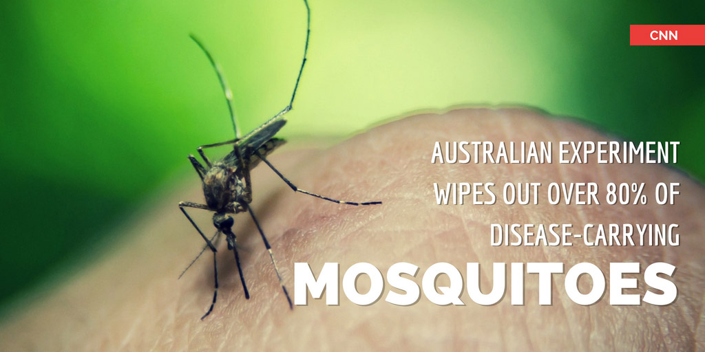 Australian experiment wipes out over 80 percent of disease-carrying mosquitoes - CNN