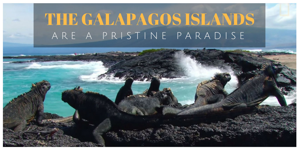 The Galapagos Islands Are a Pristine Paradise - National Geographic