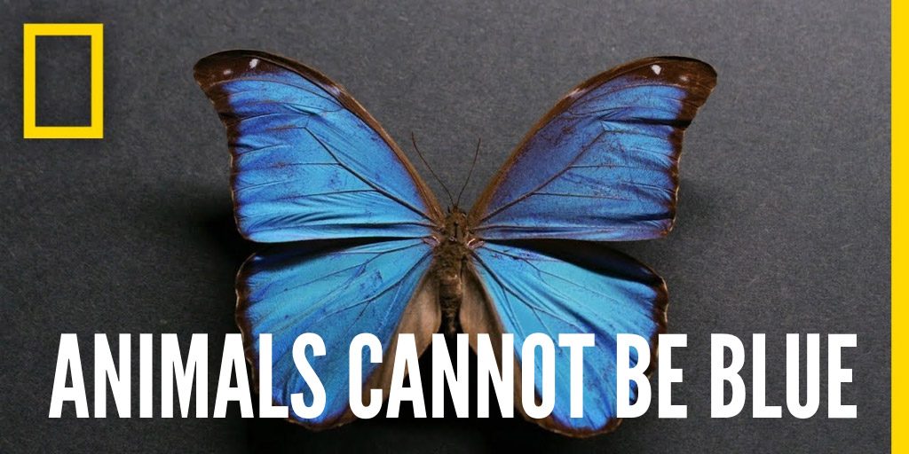 Animals Cannot Be Blue - National Geographic
