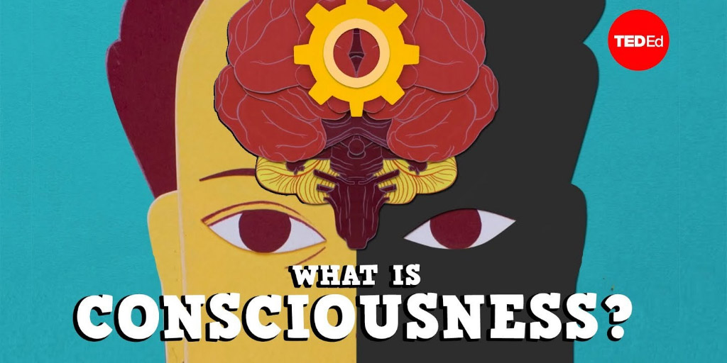 What is consciousness? - Michael S. A. Graziano - TED-Ed