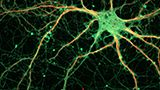 Neuroscience Online Courses